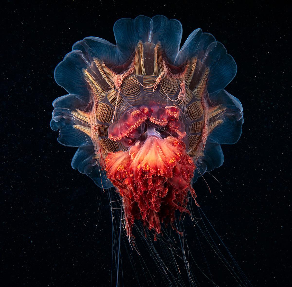Фотографии морской жизни у Полярного круга-6