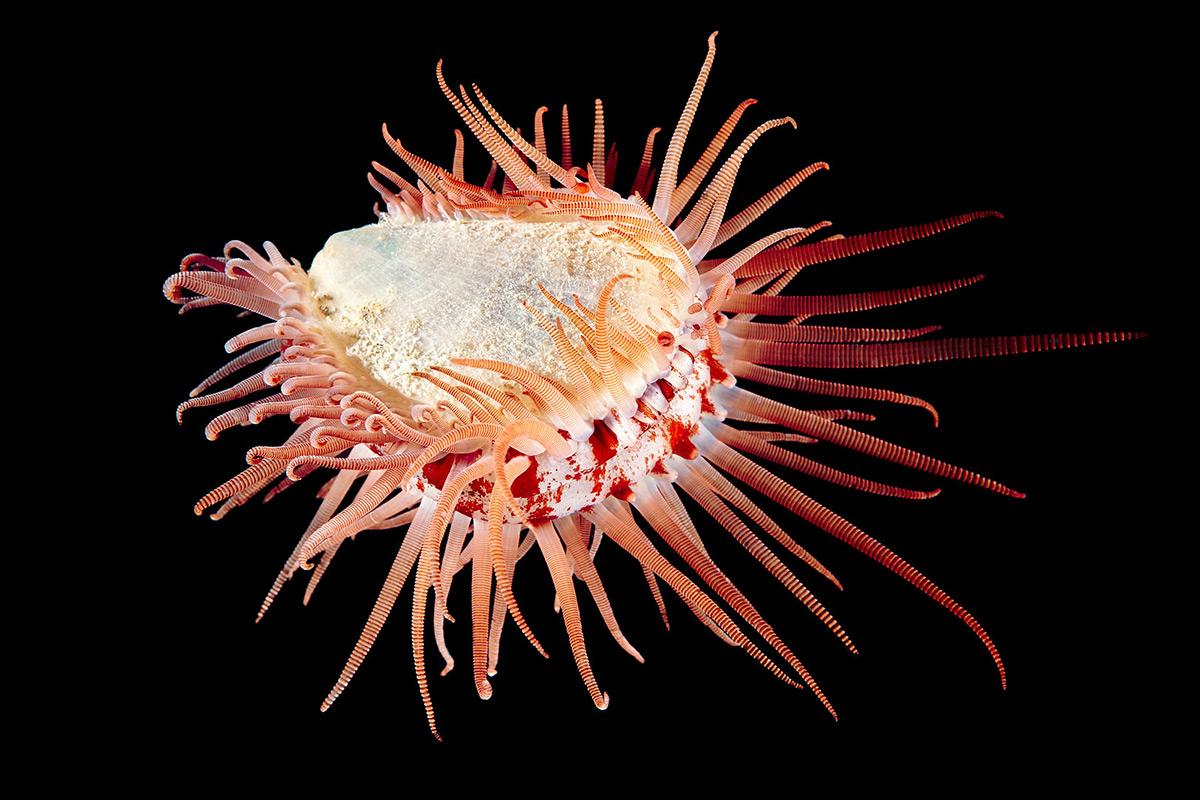 Фотографии морской жизни у Полярного круга-9