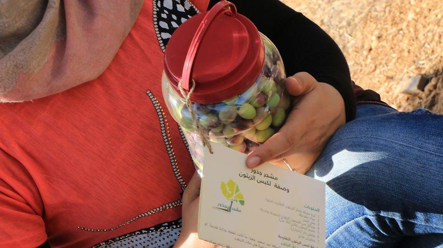 Палестина, оливки, сбор урожая, фото № 12