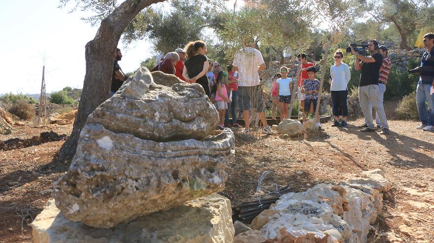 Палестина, оливки, сбор урожая, фото № 7