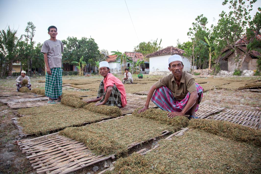 фермеры выращивающие табак, фото-11