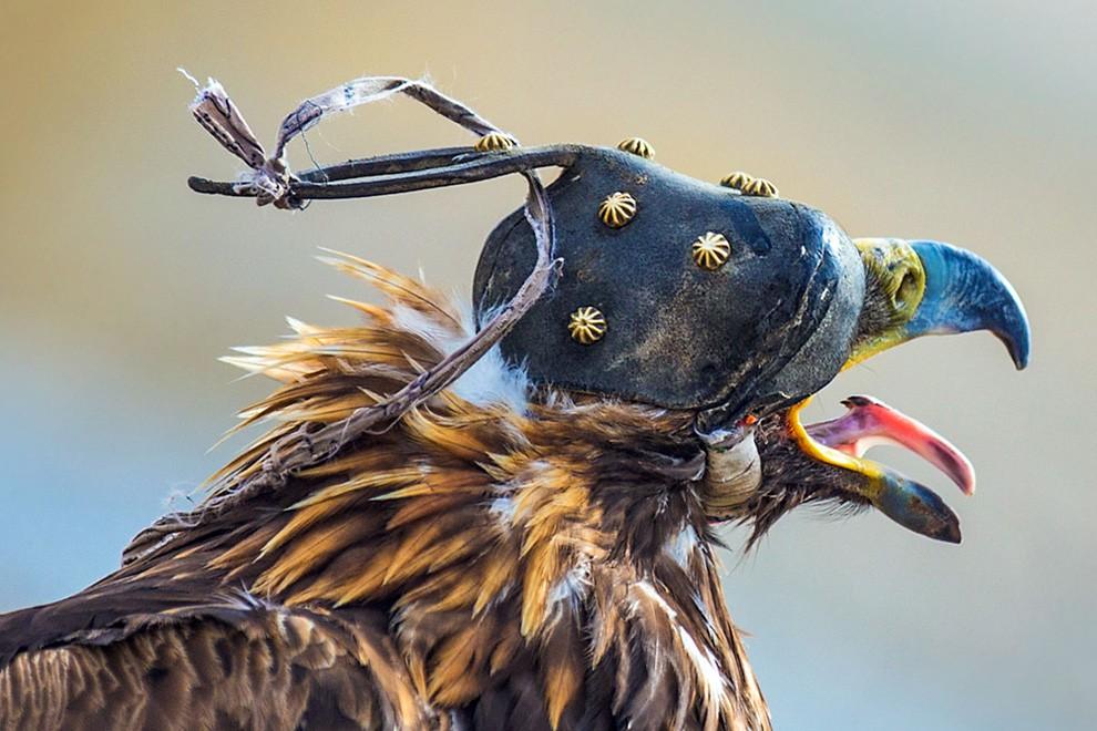 фестиваль Золотой Орел в Монголии-4