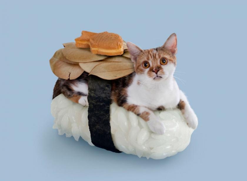 фото котов, котоики, смешные кошки-1