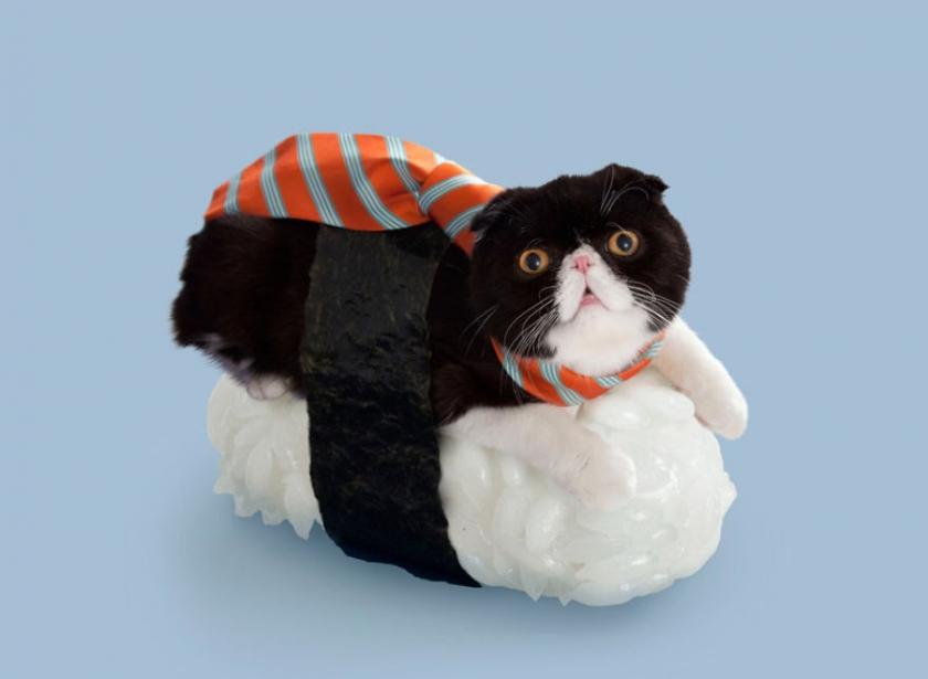 фото котов, котоики, смешные кошки-10