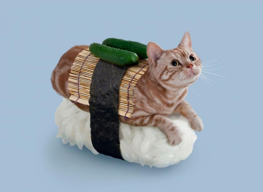 фото котов, котоики, смешные кошки-11