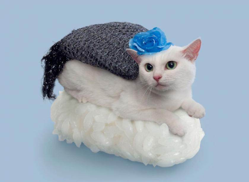 фото котов, котоики, смешные кошки-12