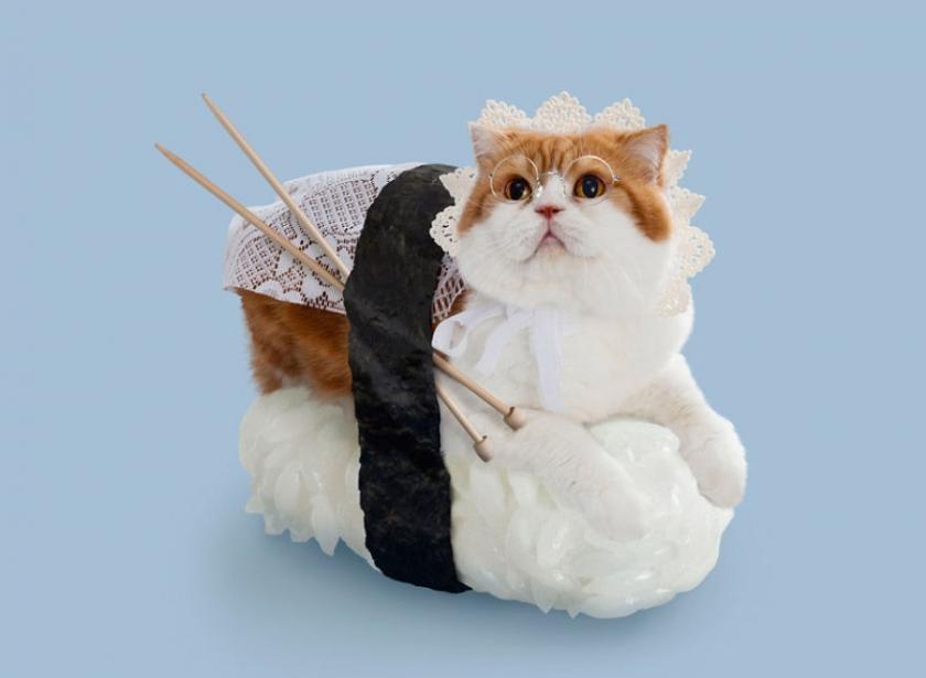 фото котов, котоики, смешные кошки-13