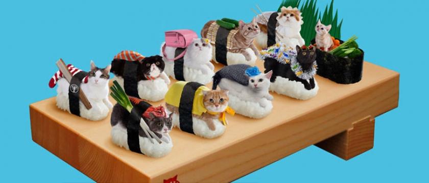 фото котов, котоики, смешные кошки-15