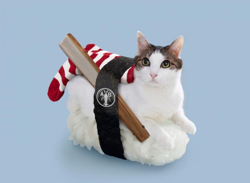 фото котов, котоики, смешные кошки-2