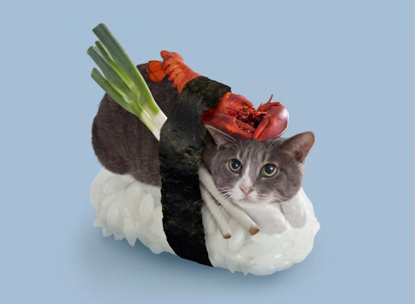 фото котов, котоики, смешные кошки-3