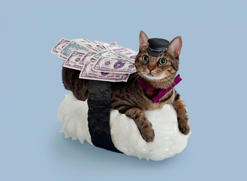 фото котов, котоики, смешные кошки-4