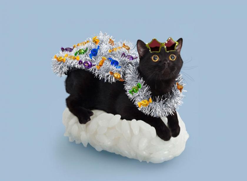 фото котов, котоики, смешные кошки-5
