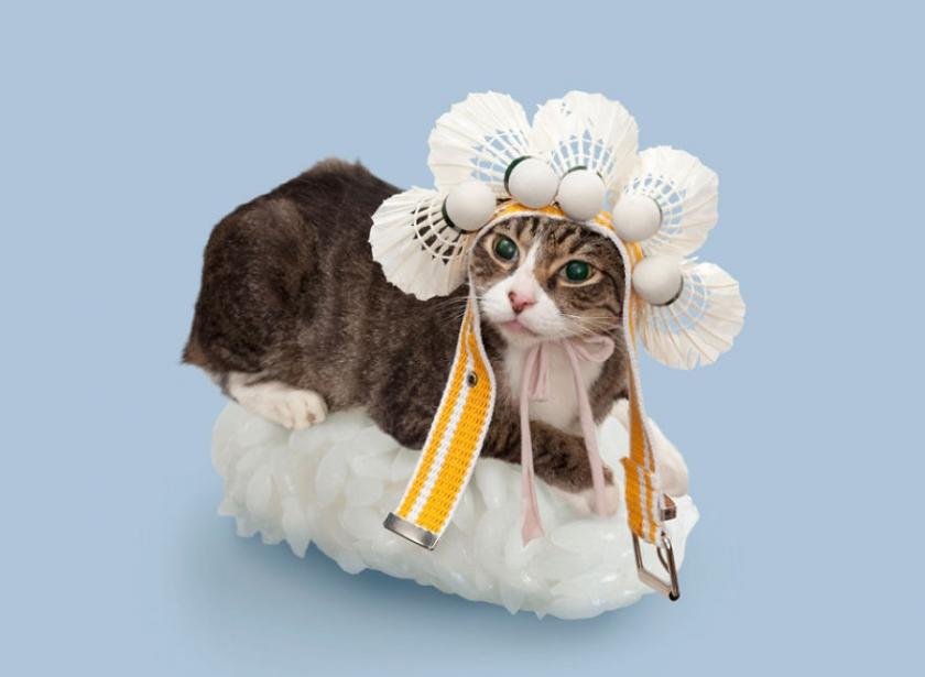 фото котов, котоики, смешные кошки-6