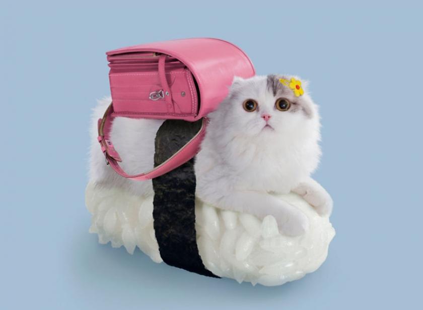 фото котов, котоики, смешные кошки-7