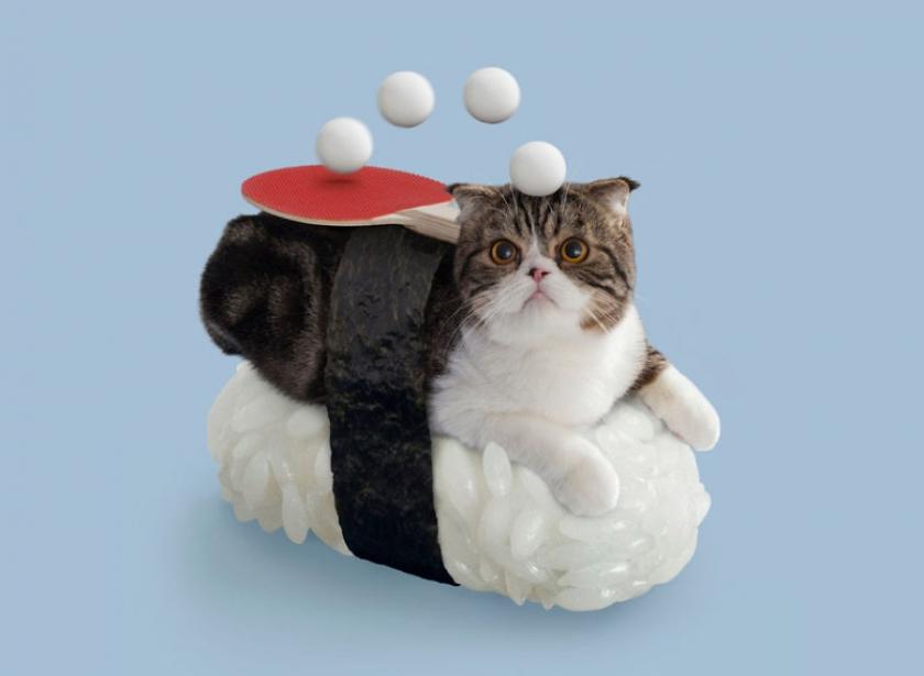 фото котов, котоики, смешные кошки-8