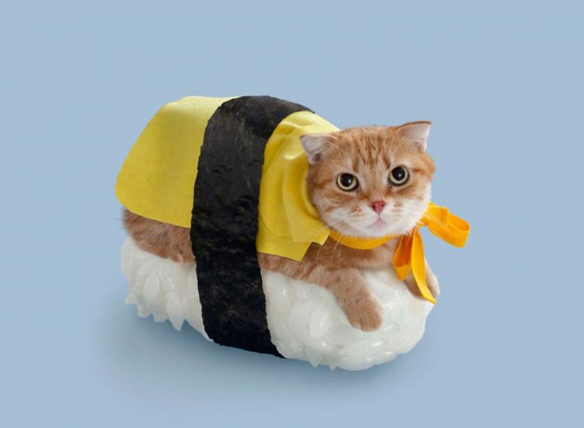 фото котов, котоики, смешные кошки-9