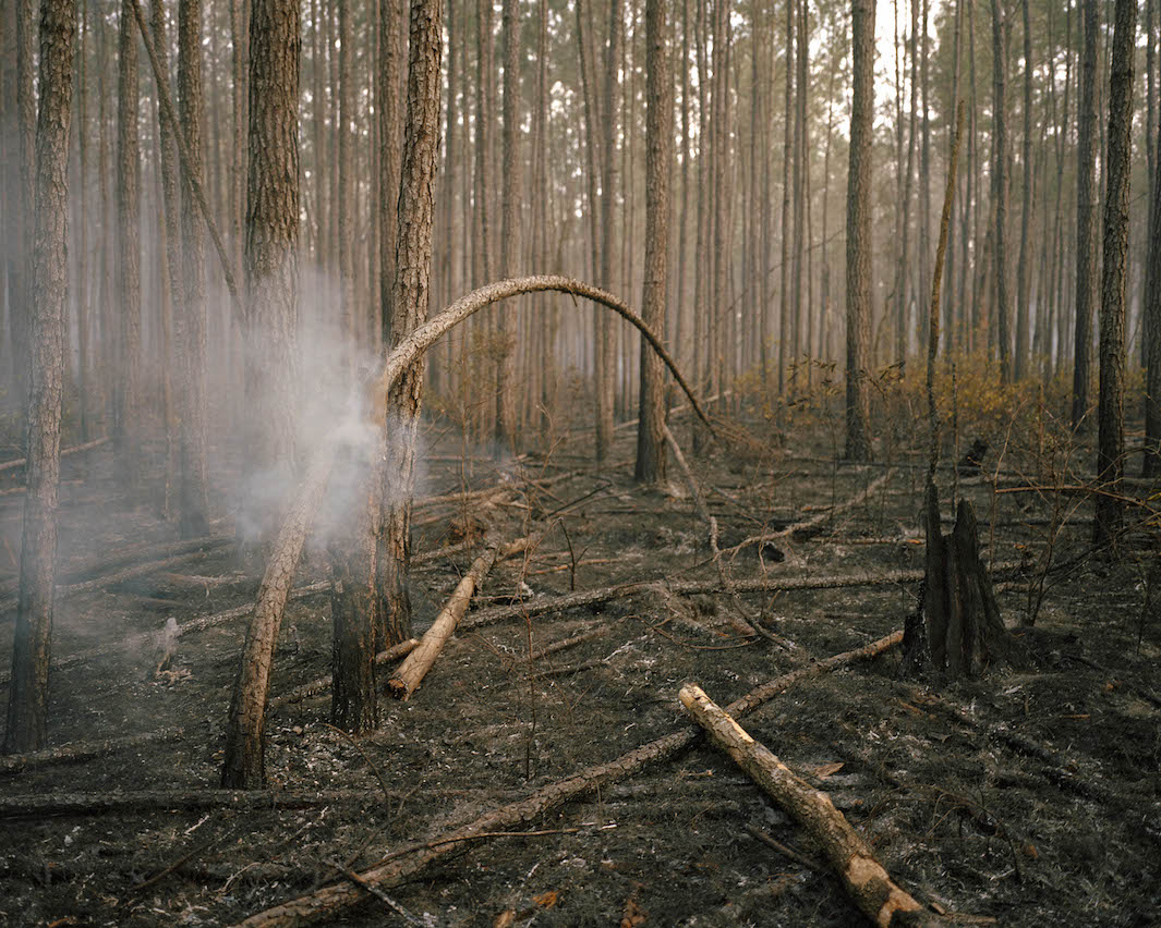 фотографии лесов США, Канады-10