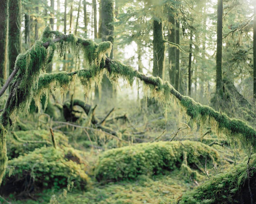 фотографии лесов США, Канады-3