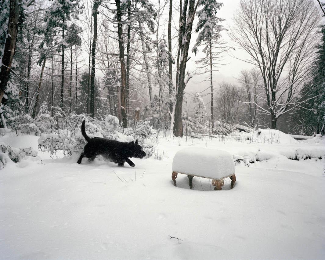 фотографии лесов США, Канады-7