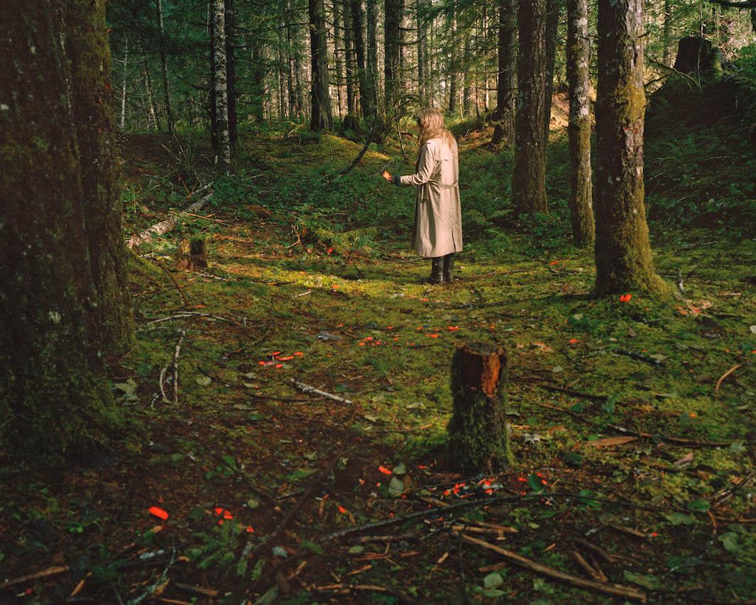 фотографии лесов США, Канады-8