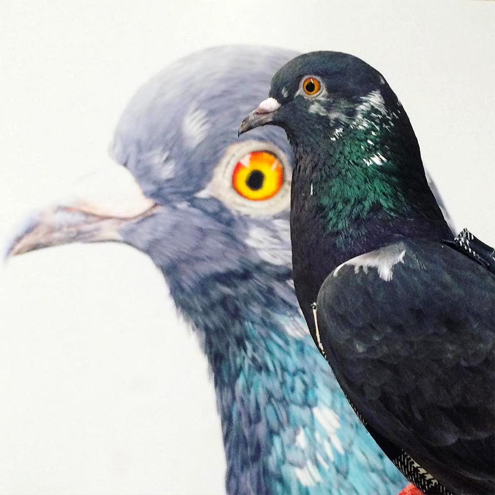 картины голубей, фото, рисунки-11
