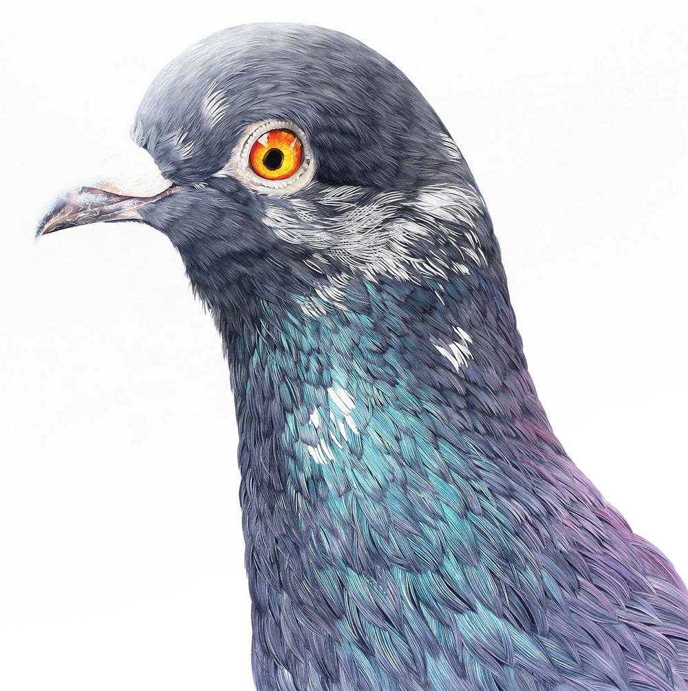 картины голубей, фото, рисунки-2