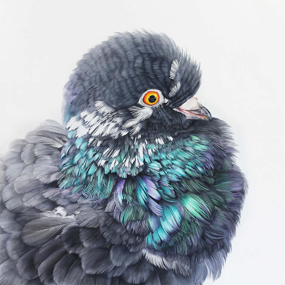 картины голубей, фото, рисунки-5