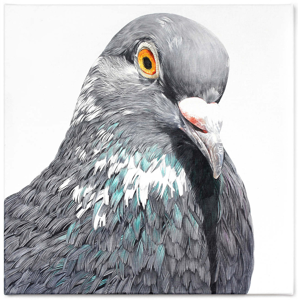 картины голубей, фото, рисунки-9