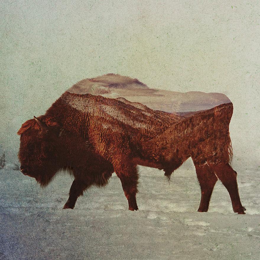 норвегия, портрет, животные, фото № 2