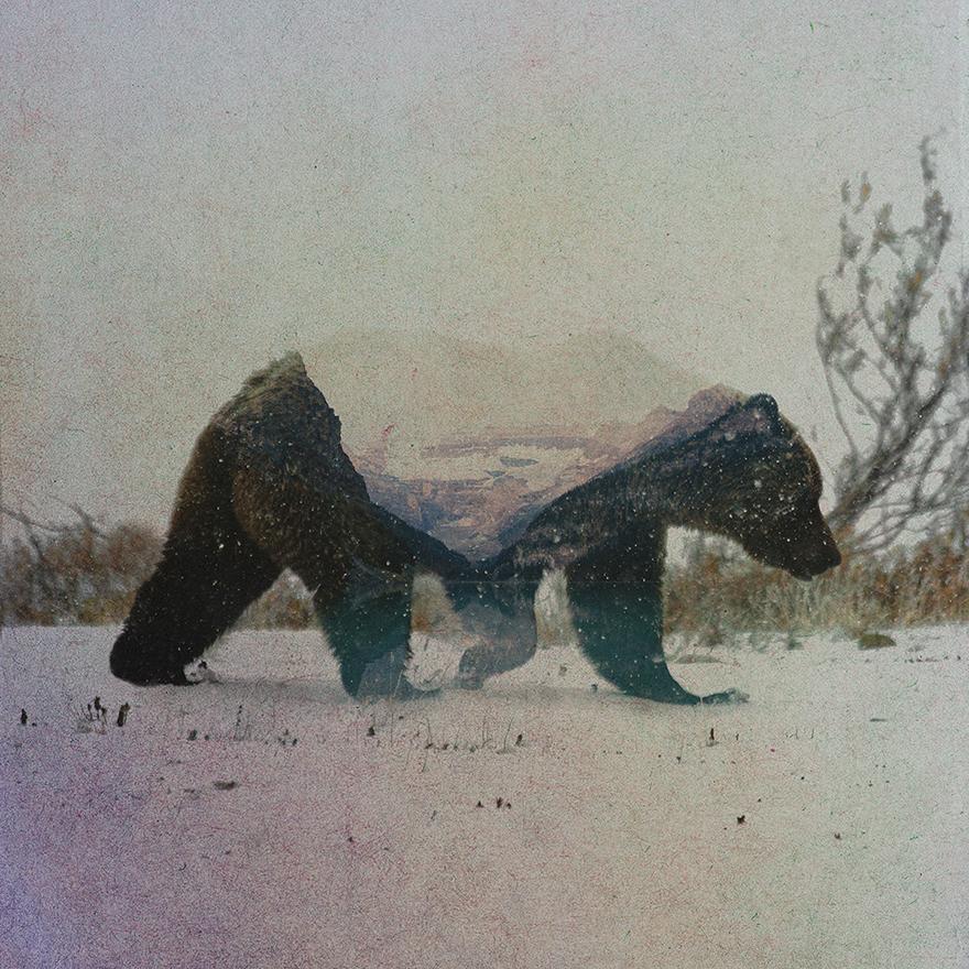 норвегия, портрет, животные, фото № 3