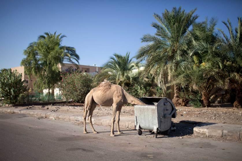 синайский полуостров, отдых в Египте-8