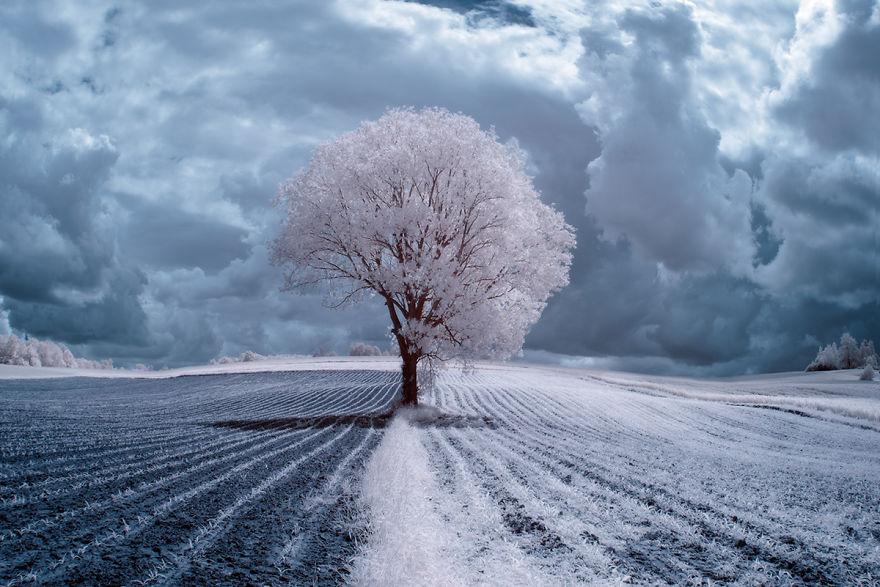 деревья в снегу, фото, природа, Польша-1