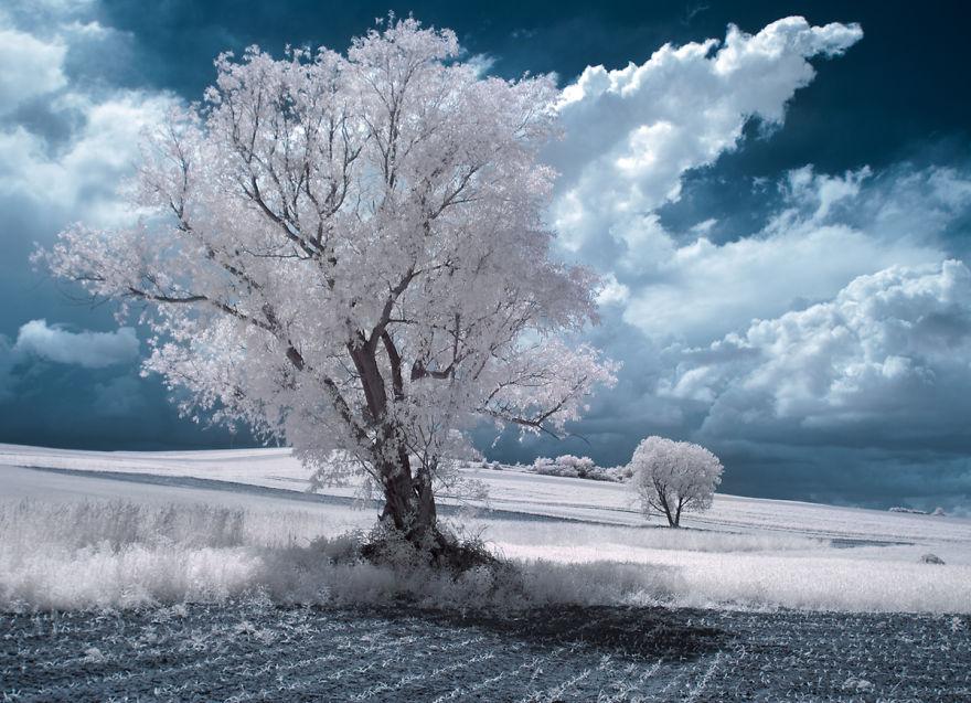 деревья в снегу, фото, природа, Польша-11