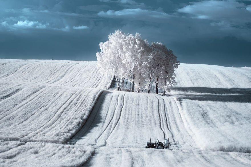 деревья в снегу, фото, природа, Польша-2