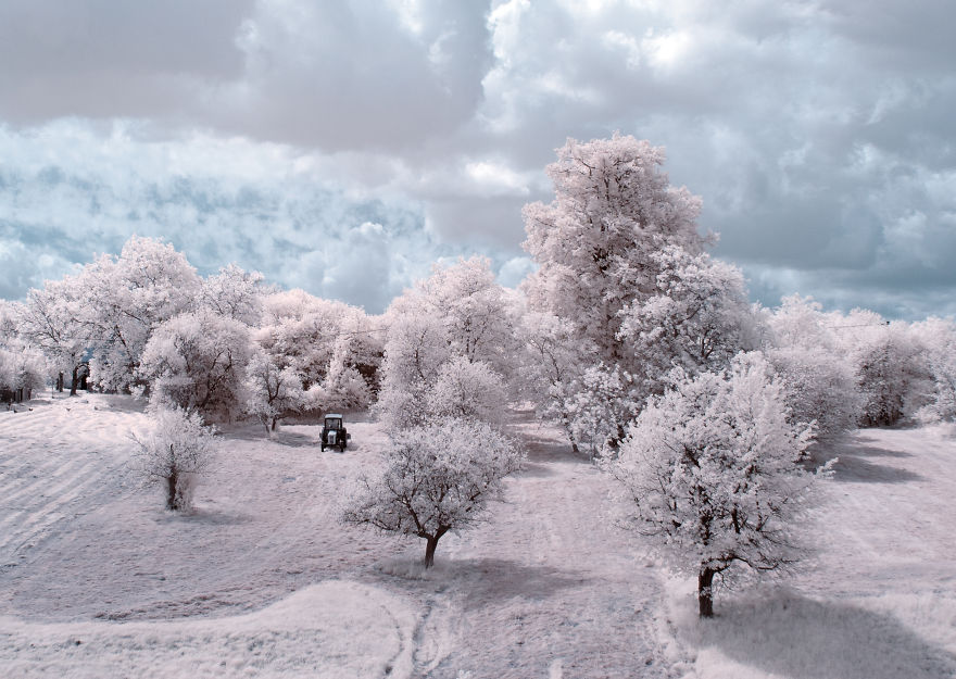 деревья в снегу, фото, природа, Польша-3
