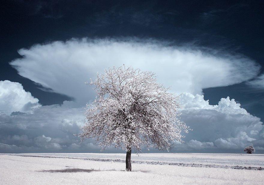 деревья в снегу, фото, природа, Польша-4