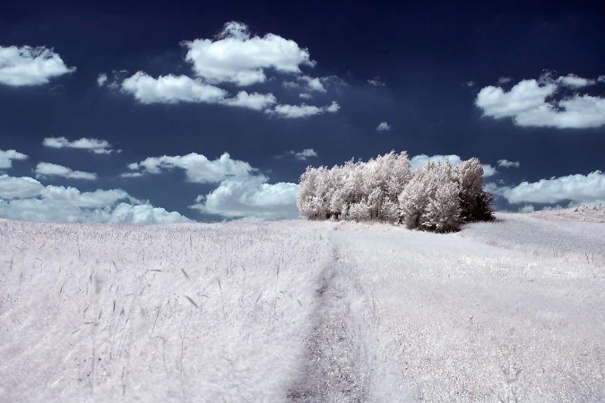 деревья в снегу, фото, природа, Польша-6