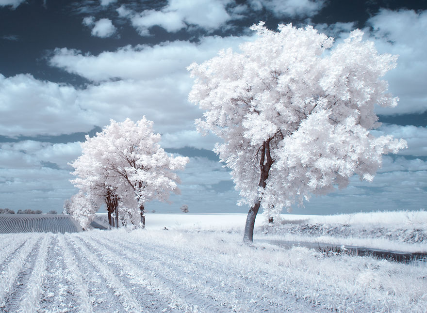 деревья в снегу, фото, природа, Польша-7