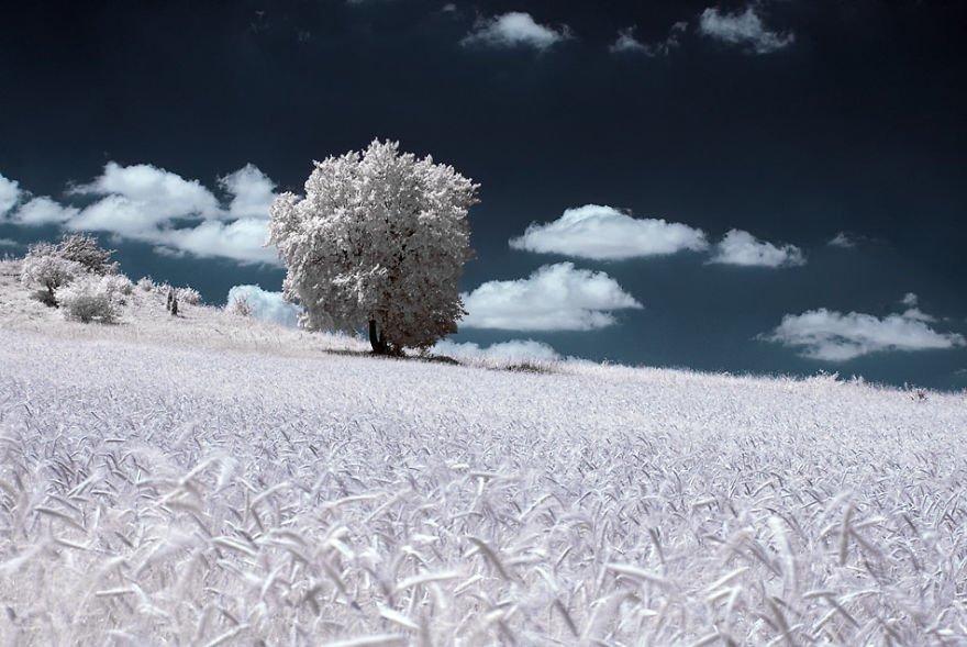 деревья в снегу, фото, природа, Польша-8