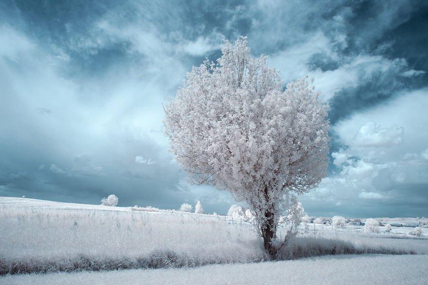 деревья в снегу, фото, природа, Польша-9