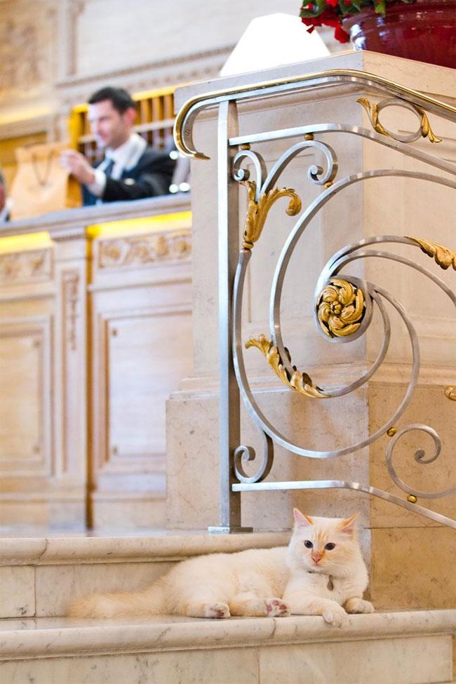 бирманская кошка, фото кошек, порода кошек-5
