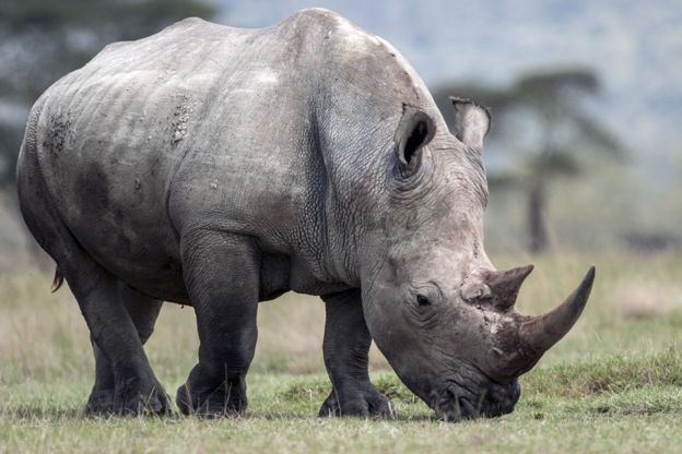 браконьерство, африканские заповедники, носорог фото , фото № 2