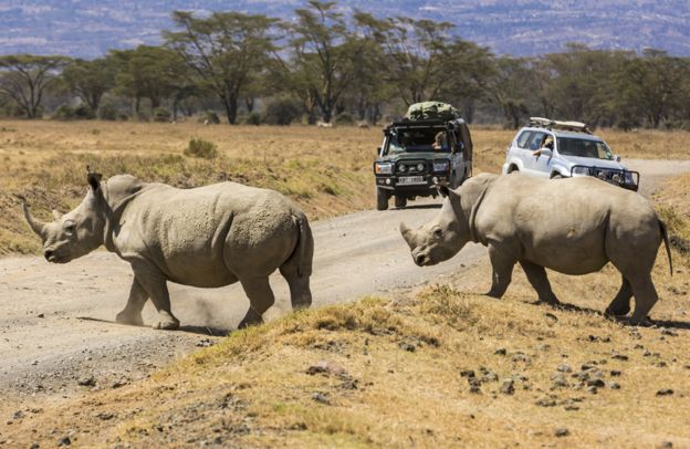 браконьерство, африканские заповедники, носорог фото , фото № 4