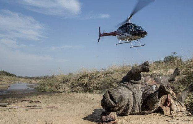 браконьерство, африканские заповедники, носорог фото , фото № 6