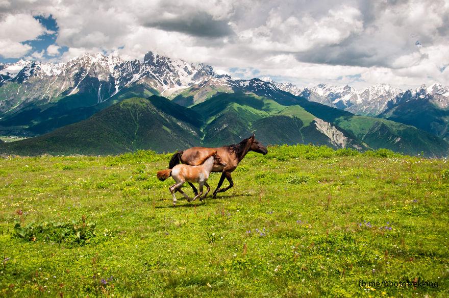 горы Грузии, Сванети, природа Грузии, фото № 4
