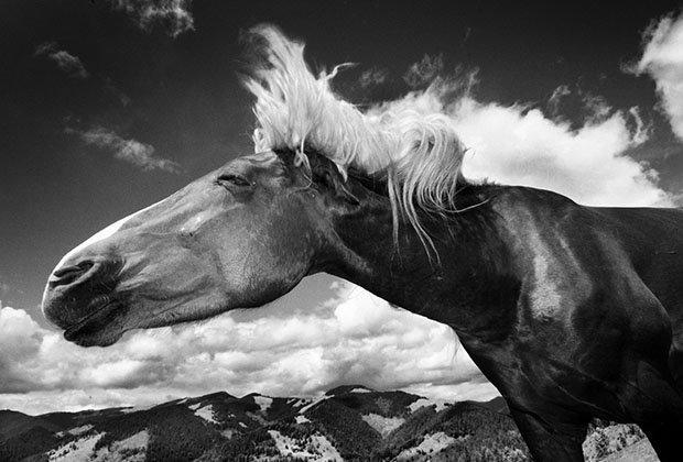 мой маленький пони, фото пони, карпатские горы-1