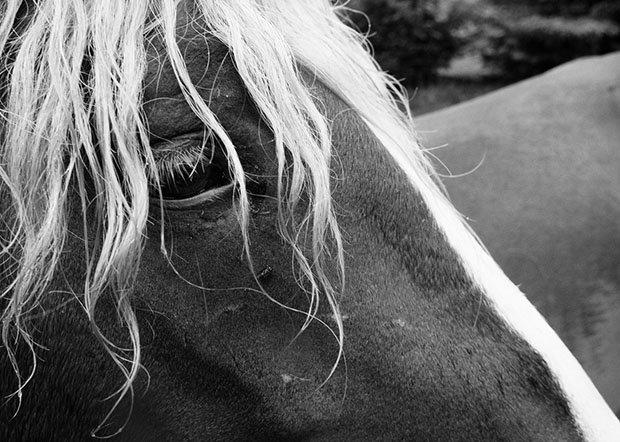 мой маленький пони, фото пони, карпатские горы-10