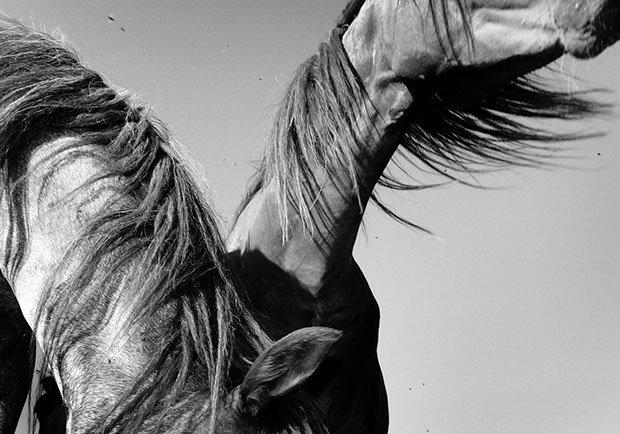 мой маленький пони, фото пони, карпатские горы-11