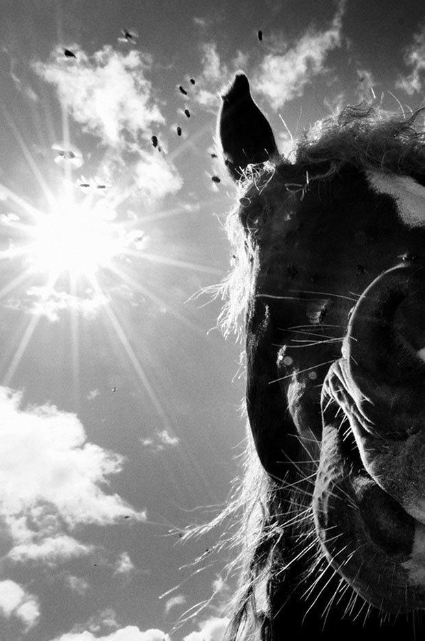 мой маленький пони, фото пони, карпатские горы-14