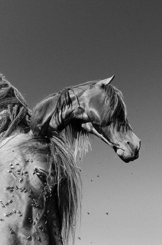 мой маленький пони, фото пони, карпатские горы-15